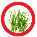 Grasstoolong